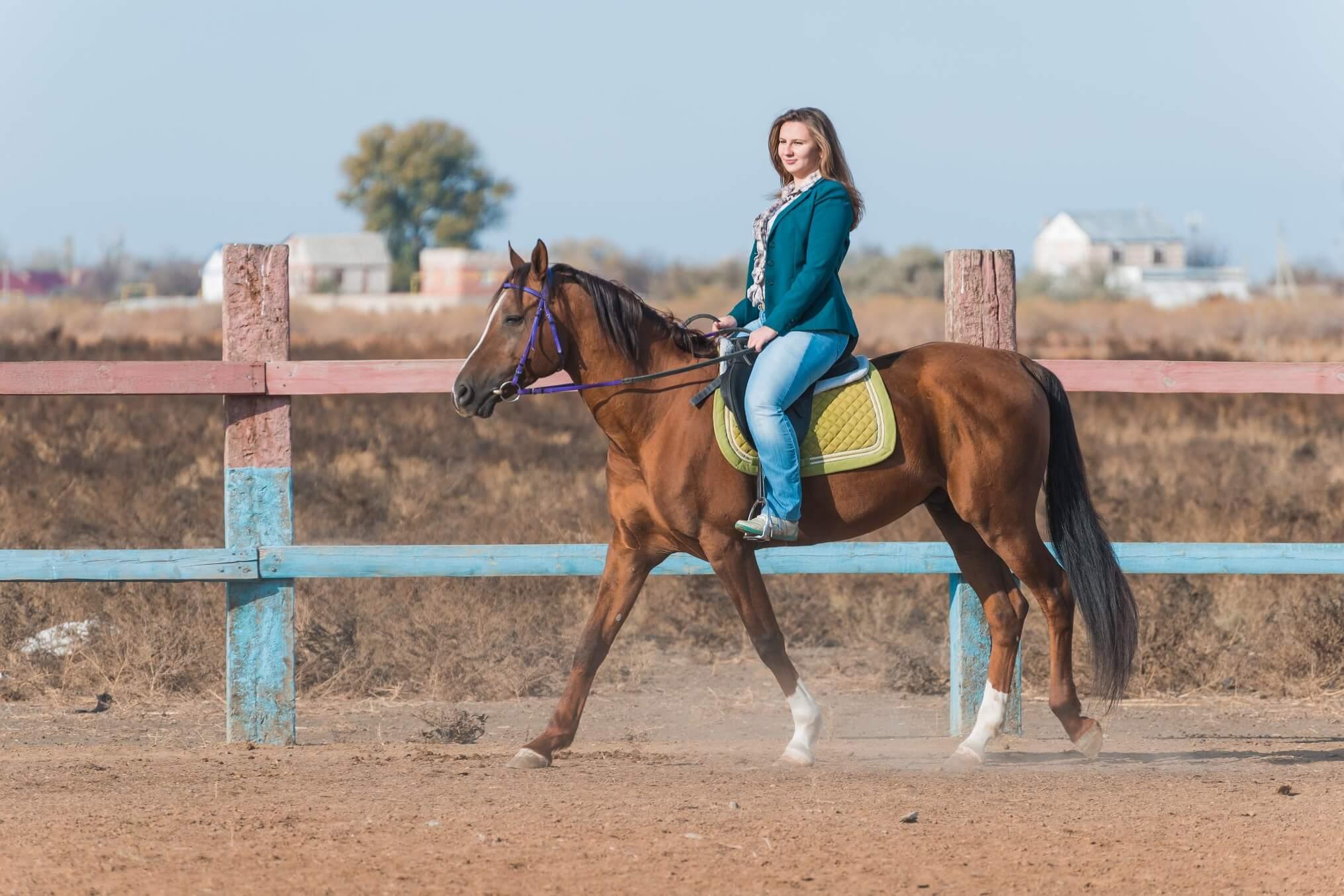 2016.11.24_horse_riding_instruction_3